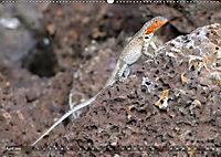 Galápagos - tierisch gut (Wandkalender 2019 DIN A2 quer) - Produktdetailbild 4