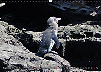 Galápagos - tierisch gut (Wandkalender 2019 DIN A2 quer) - Produktdetailbild 9