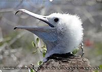 Galápagos - tierisch gut (Wandkalender 2019 DIN A2 quer) - Produktdetailbild 11