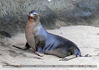 Galápagos - tierisch gut (Wandkalender 2019 DIN A2 quer) - Produktdetailbild 12