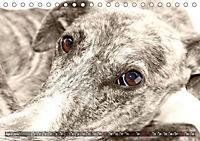 Galgo eye-catcher (Tischkalender 2019 DIN A5 quer) - Produktdetailbild 4