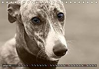 Galgo eye-catcher (Tischkalender 2019 DIN A5 quer) - Produktdetailbild 1