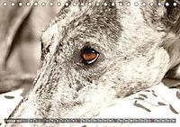 Galgo eye-catcher (Tischkalender 2019 DIN A5 quer) - Produktdetailbild 2