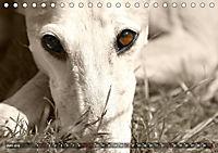 Galgo eye-catcher (Tischkalender 2019 DIN A5 quer) - Produktdetailbild 6