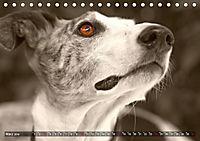 Galgo eye-catcher (Tischkalender 2019 DIN A5 quer) - Produktdetailbild 3