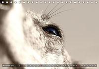 Galgo eye-catcher (Tischkalender 2019 DIN A5 quer) - Produktdetailbild 11