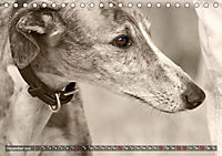 Galgo eye-catcher (Tischkalender 2019 DIN A5 quer) - Produktdetailbild 12