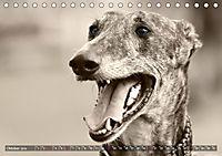Galgo eye-catcher (Tischkalender 2019 DIN A5 quer) - Produktdetailbild 10