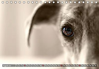 Galgo eye-catcher (Tischkalender 2019 DIN A5 quer) - Produktdetailbild 8
