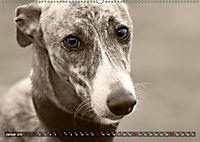Galgo eye-catcher (Wandkalender 2019 DIN A2 quer) - Produktdetailbild 1