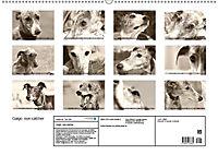Galgo eye-catcher (Wandkalender 2019 DIN A2 quer) - Produktdetailbild 13