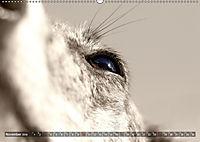 Galgo eye-catcher (Wandkalender 2019 DIN A2 quer) - Produktdetailbild 11