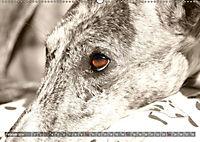 Galgo eye-catcher (Wandkalender 2019 DIN A2 quer) - Produktdetailbild 2