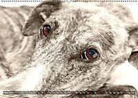 Galgo eye-catcher (Wandkalender 2019 DIN A2 quer) - Produktdetailbild 4