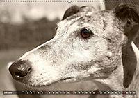 Galgo eye-catcher (Wandkalender 2019 DIN A2 quer) - Produktdetailbild 7