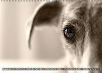 Galgo eye-catcher (Wandkalender 2019 DIN A2 quer) - Produktdetailbild 8