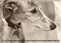 Galgo eye-catcher (Wandkalender 2019 DIN A2 quer) - Produktdetailbild 12