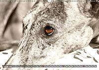 Galgo eye-catcher (Wandkalender 2019 DIN A3 quer) - Produktdetailbild 2