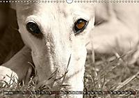 Galgo eye-catcher (Wandkalender 2019 DIN A3 quer) - Produktdetailbild 6