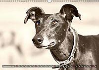 Galgo eye-catcher (Wandkalender 2019 DIN A3 quer) - Produktdetailbild 9
