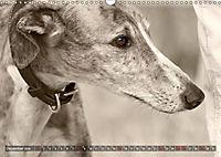 Galgo eye-catcher (Wandkalender 2019 DIN A3 quer) - Produktdetailbild 12