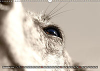 Galgo eye-catcher (Wandkalender 2019 DIN A3 quer) - Produktdetailbild 11