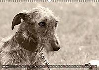 Galgo eye-catcher (Wandkalender 2019 DIN A3 quer) - Produktdetailbild 5