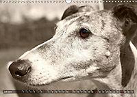 Galgo eye-catcher (Wandkalender 2019 DIN A3 quer) - Produktdetailbild 7