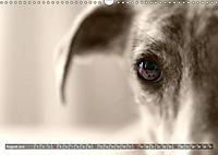 Galgo eye-catcher (Wandkalender 2019 DIN A3 quer) - Produktdetailbild 8