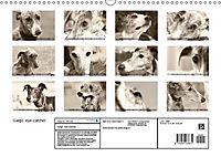Galgo eye-catcher (Wandkalender 2019 DIN A3 quer) - Produktdetailbild 13