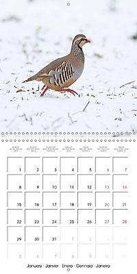 Game Birds (Wall Calendar 2018 300 × 300 mm Square) - Produktdetailbild 1