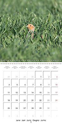 Game Birds (Wall Calendar 2018 300 × 300 mm Square) - Produktdetailbild 6