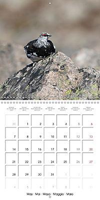 Game Birds (Wall Calendar 2018 300 × 300 mm Square) - Produktdetailbild 5