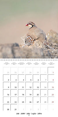 Game Birds (Wall Calendar 2018 300 × 300 mm Square) - Produktdetailbild 7