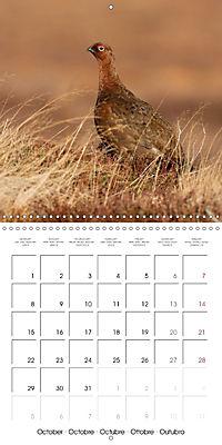 Game Birds (Wall Calendar 2018 300 × 300 mm Square) - Produktdetailbild 10