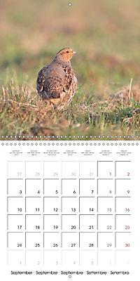 Game Birds (Wall Calendar 2018 300 × 300 mm Square) - Produktdetailbild 9