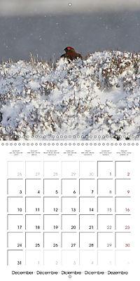 Game Birds (Wall Calendar 2018 300 × 300 mm Square) - Produktdetailbild 12