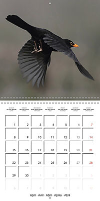 Garden Birds in Flight (Wall Calendar 2019 300 × 300 mm Square) - Produktdetailbild 4