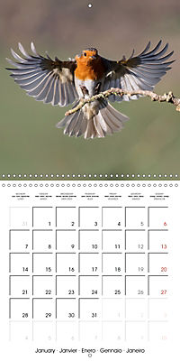 Garden Birds in Flight (Wall Calendar 2019 300 × 300 mm Square) - Produktdetailbild 1