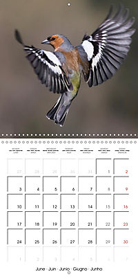 Garden Birds in Flight (Wall Calendar 2019 300 × 300 mm Square) - Produktdetailbild 6