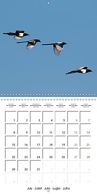 Garden Birds in Flight (Wall Calendar 2019 300 × 300 mm Square) - Produktdetailbild 7