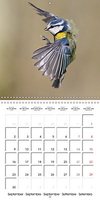 Garden Birds in Flight (Wall Calendar 2019 300 × 300 mm Square) - Produktdetailbild 9
