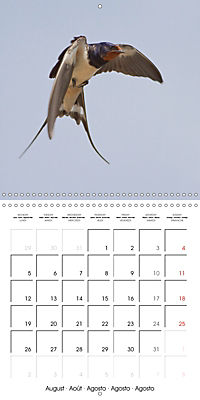 Garden Birds in Flight (Wall Calendar 2019 300 × 300 mm Square) - Produktdetailbild 8