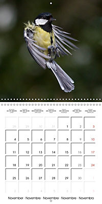 Garden Birds in Flight (Wall Calendar 2019 300 × 300 mm Square) - Produktdetailbild 11