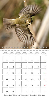 Garden Birds in Flight (Wall Calendar 2019 300 × 300 mm Square) - Produktdetailbild 12