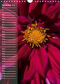 Garden Flowers 2019 (Wall Calendar 2019 DIN A4 Portrait) - Produktdetailbild 11