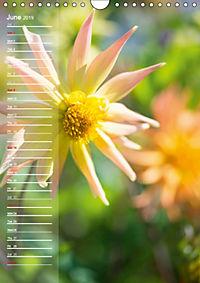 Garden Flowers 2019 (Wall Calendar 2019 DIN A4 Portrait) - Produktdetailbild 6