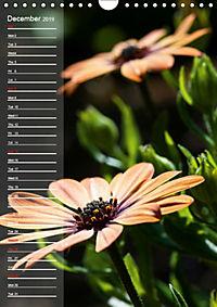 Garden Flowers 2019 (Wall Calendar 2019 DIN A4 Portrait) - Produktdetailbild 12