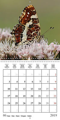 Garden pond fascination (Wall Calendar 2019 300 × 300 mm Square) - Produktdetailbild 6
