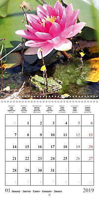 Garden pond fascination (Wall Calendar 2019 300 × 300 mm Square) - Produktdetailbild 1